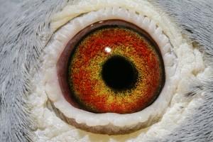 DV06134- 11 - 551 oog duivin