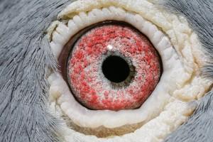 NL10-1153824_oog duivin