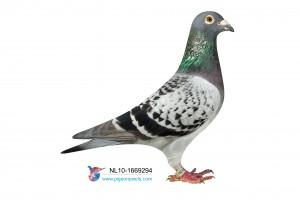 NL10-1669294 foto duivin