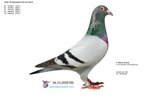 NL10-2055785 doffer