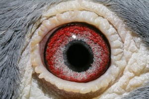 NL13-1705949_oog doffer
